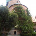 Hildesheimer-Rose